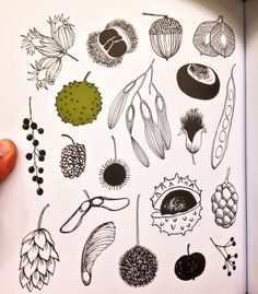20 Ways to Draw a Tree by Eloise Renouf