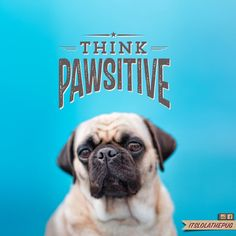 Lolas word of the day: Think PAWsitive @itslolathepug