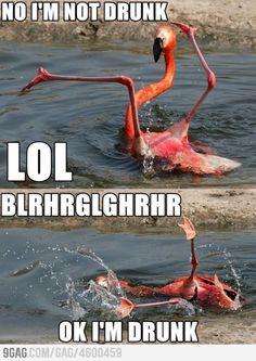 Go home flamingo, you're drunk!