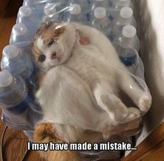 shrink wrapped kitteh