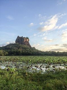 Keen to find some Sri Lanka highlights? Head to the North Central Province for some of the most amazing historical sights and ELEPHANTS!