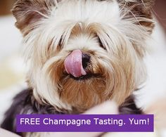Yorkie Want to feed your Yorkie a nutritious and well-balanced diet, but don't know where to begin? Here we break down what should be in a Yorkie's food, what should NOT be in it, and our top picks for the best dog food for Yorkshire Terriers! Yorkies, I Love Dogs, Cute Dogs, Awesome Dogs, Top Dog Breeds, Puppy Breeds, Cat Breeds, Hypoallergenic Dog Breed, Yorkshire Terrier Puppies