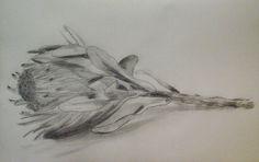 Portrait of a protea by THollander.deviantart.com on @DeviantArt