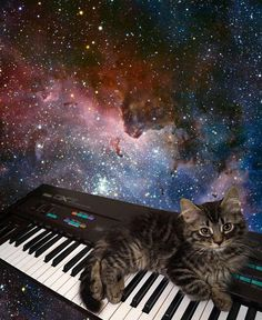 Kitten on a Yamaha DX7 ...basically not giving a fuck... ...in deep space