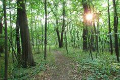 A photo of Sharon Hills Nature Preserve.  Originally taken by Panoramio user UnagiUnagi.