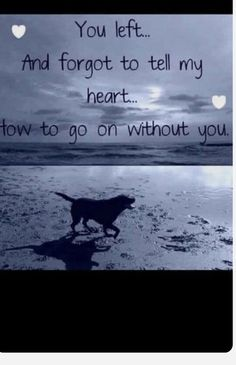 Losing A Pet Quotes, Losing A Dog, Cat Quotes, Animal Quotes, Dog Best Friend Quotes, Pet Loss Grief, Pet Remembrance, Dog Memorial, Rainbow Bridge