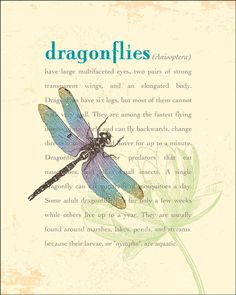 Dragonfly totem: This is a symbol of transformation and to be aware that major life changes are coming your way. It's also a sign to reconnect with your inner strength and courage.