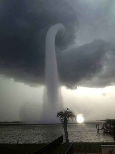 water tornado - clouds - sky - beach - sun - palm tree - NATURE - black and white photo - earth All Nature, Science And Nature, Amazing Nature, Science Space, Fuerza Natural, Cool Pictures, Cool Photos, Amazing Photos, Funniest Pictures