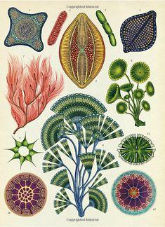 Vintage Illustration Art, Illustration Art Drawing, Art Drawings, Botanical Drawings, Botanical Prints, Bio Arte, Arte Horror, Plant Art, Art Plastique