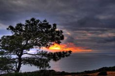 Torrey Pines Tree HDR by timmmmy, via Flickr