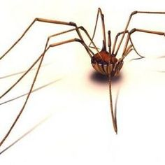 How To Get Rid Of Spiders In The House - howtogetridofstuff.com
