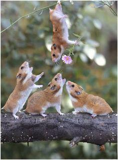 Rare-Precious-Moments-Animal-Life-4