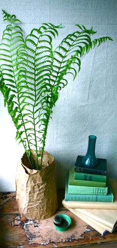 Ostrich In A Bag. A simple paper bag wrap covers the pot of an ostrich fern. I love the texture of the paper and the dramatic look of the leaves…