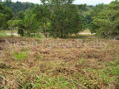 A 314 SQM residential ridge lot for sale in Hillsborough Pointe Village, Pueblo de Oro, Cagayan de Oro City, a well-fenced subdivision with security. Lots For Sale, Philippines, Vineyard, City, Plants, Outdoor, Cagayan De Oro, Outdoors, Vine Yard