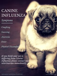 Canine Influenza: What You Need to Know ~ via http://mykidhaspaws.org/2015/04/13/medical-monday-canine-influenza/