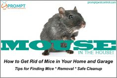 Keep Rats Out For Good! The most effective and easy-to-use #rodent_repellent_system in the industry from Prompt Pest Control. This is the welfare friendly solution to keep rats, mice and other pests away for your home. #rodentcontrol Mice Removal, Rat Repellent, Getting Rid Of Mice, Garden Guide, House Mouse, Protecting Your Home, Homestead Survival, Rodents, The Ranch