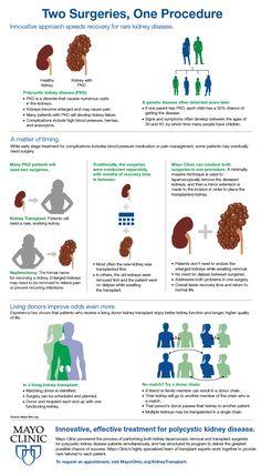 Living Kidney Donor, Polycystic Kidney Disease, Brain Anatomy, Organ Transplant, Organ Donation, Blood Vessels, Clinic, Recovery