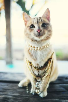 The Pioneer Woman has very fancy cats. Pretty Cats, Beautiful Cats, Pretty Kitty, Crazy Cat Lady, Crazy Cats, I Love Cats, Cool Cats, Gato Calico, Chat Kawaii