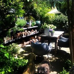 Abigail Aherns terrace and outdoor kitchen, such a wonderful place to be! Back Gardens, Small Gardens, Outdoor Gardens, City Gardens, Roof Gardens, Love Garden, Dream Garden, Garden Spaces, Outdoor Living