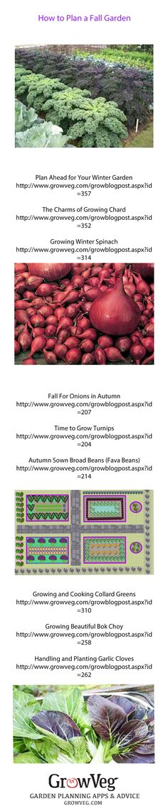 How to Plan ahead for winter and how to grow the perfect fall garden full of tasty crops that will keep growing right through to the first frosts.
