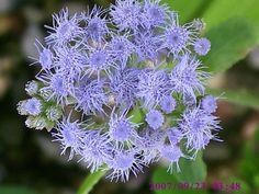 Flores Moradas (no hay? | Cuidar de tus plantas es facilisimo.com