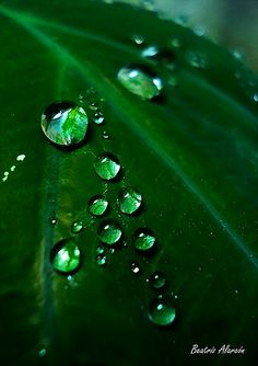l 40 shades of green l Go Green, Green Colors, Colours, Photographie Macro Nature, Photography Beach, Water Droplets, Green Nature, Emerald Green, Emerald Colour