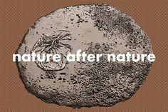 Fridericianum: nature after nature and Maha Maamoun