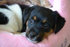 My lovely Puppy!