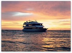 105 ft Luxury Dinner Yacht in Naples Florida available for nightly dinner cruises, lunch and sightseeing cruises, private parties, weddings, corporate events .the best events are on the water! Florida Events, Florida Vacation, Naples Sunset, Marco Island Florida, Naples Florida, Florida Fl, Fort Myers Beach, Princess Cruises, Gulf Of Mexico