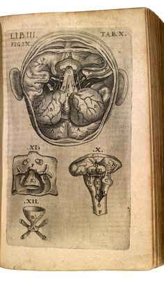Lib. III. Tab. X. Theatrum anatomicum, 1605 (https://pinterest.com/pin/287386019949874427). Bauhin, Kaspar (1560-1624 https://www.pinterest.com/pin/287386019949818463/) with Theodor de Bry (https://www.pinterest.com/pin/287386019949610405).