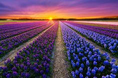 Beautiful landscape photos from across the world. Canvas Poster, Poster Prints, Landscape Photos, Landscape Photography, Destinations, The Colour Of Spring, Photo To Art, Spring Photos, Photography Competitions