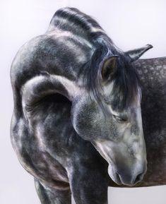 Jill Greenberg Horses