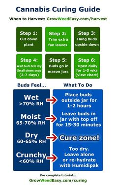 How to cure marijuana overview - cheat sheet diagram. I have never tried this but I am starting my research.