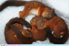 oh my god, i just want to snuggle with them! so adorable.