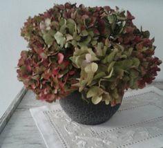 Il mio vaso di ortensie