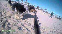 Um cão e um pau de selfie   Veja o resultado