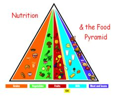 Sports Nutrition Pyramid Get the free e-book at http://www.bodybuildingreports.com