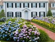 How to Grow Hydrangeas |  For the most part, hydrangeas like morning sun and afternoon shade. Climbing hydrangeas and oakleaf hydrangeas tolerate more shade, and the lacecap and panicle hydrangeas prefer more sun. To start, plant hydrangeas in rich, well-drained soil where they will receive adequate moisture. A bit temperamental in early stages, the roots will rot in heavy or water-logged soils, but they will wilt if conditions are too hot and dry. Once established, hydrangeas will thrive…