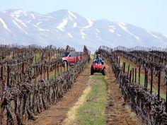vineyard israel