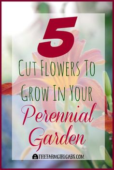 Bring the outdoors in with these Five Cut Flowers To Grow In Your Perennial Garden.