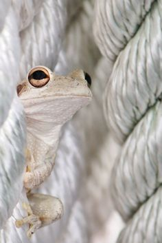 Different ~ Rmsp (Tree Frog)