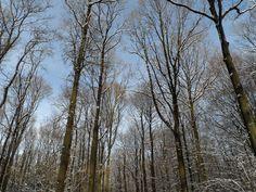 De bossen in Vijlen