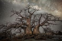 Beth Moon - Photography - Ancient Trees