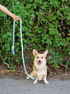 Meet Amelia, Adrianna Adarme's adorableCorgi, featured in the blogger's new book, A Year of Cozy.Photo byBilly Green.