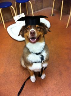 I did it! I graduated! Where's the treat? Can I have the treat now?""