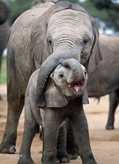 Zoo Animals – Cute Animals – Funny Animals – An Amazing Zoo Trip Zoo Animals, Animals And Pets, Funny Animals, Wild Animals, Majestic Animals, Animals Beautiful, Elephas Maximus, Save The Elephants, Baby Elephants
