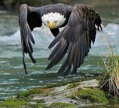 Lone Eagle...