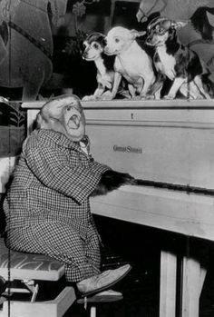 It's just a pianist monkey and his chorus of chihuahuas, that's all.