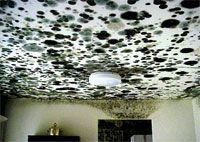 Mold Remediation in Schools and Commercial Buildings | Mold and Moisture | US Environmental Protection Agency