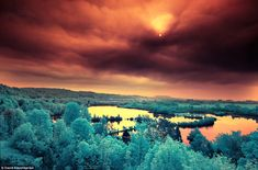 Bubblegum pink grass, canary yellow trees and fire orange sky: Breathtaking infrared photos turn pastoral French landscapes into candy-colored wonderland   Mail Online